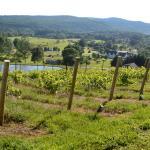 pailsop summer vines