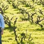 the bush vines