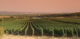 The vineyards as Castra Rubra
