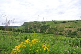 Matisco Landscape