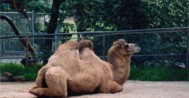 Fiesta parade, Spokane, Mountains, San Simeon , Hanford Japanese Museum, Charles Paddock Zoo, Los Angles Zoo,Cayucos, Morro Bay 79