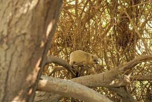 Israel Wüste Negev Totes Meer Ein Gedi Nature Reserve Reisen Reisetipps