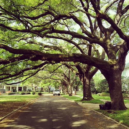 Edgewood Road in Parkland Estates, Tampa