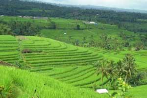 Jatiluwih Bali