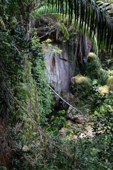 Bako - Jungle