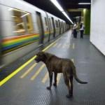 MetroPerro