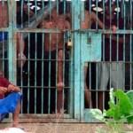 El gobierno dejo el problema penitenciario en manos de sus mediocres y ahora, como corolario, intenta quitarle la inmunidad parlamentaria a los congresistas que han denunciado la barbarie.