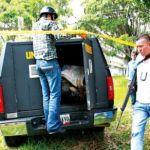 """Escape de """"Lino"""" del hospital de Los Andes derivó en un intenso tiroteo."""