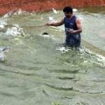 Tres millones de personas están en peligro por constante contaminación del Lago de Tacarigua.