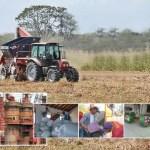 La Corporación Venezolana de Alimentos, creada en 2001 por mandato de la Ley de Tierras de ese año, aglutinó en 10 años 11 grandes empresas que a su vez manejaban otras compañías. De ellas, hoy sólo sobreviven 5, porque el resto fue liquidado en 2010.