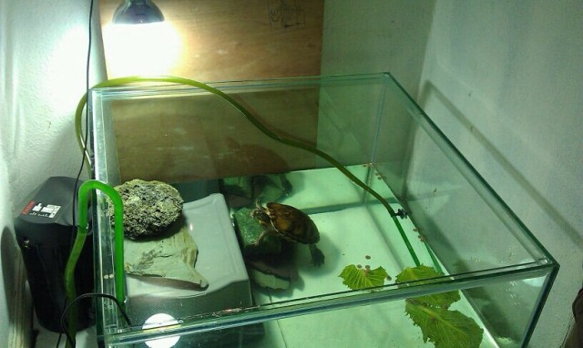 SE England 800x800x600 TURTLE TANK FOR SALE   Reptile Forums