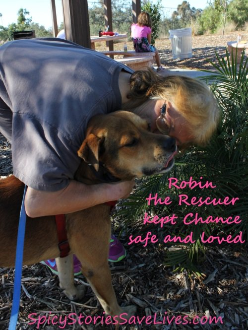 Cuddly, mellow dog rescued from owner who punched and kicked him, now needs home