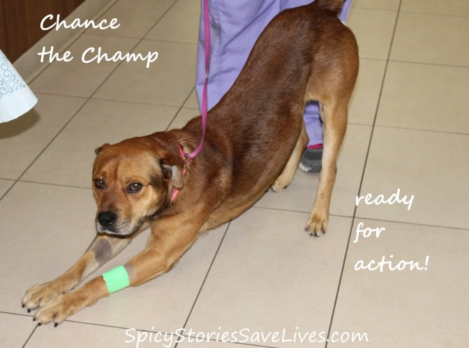 San Diego Animal Support Foundation helps rescue sweet dog who was punched by owner