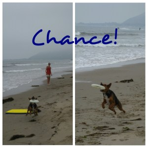 Chance, the Frisbee dog