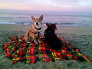 Brothers  enjoying sunrise at the beach
