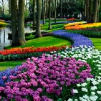 Jardim com flores - dicas e fotos dos mais lindos