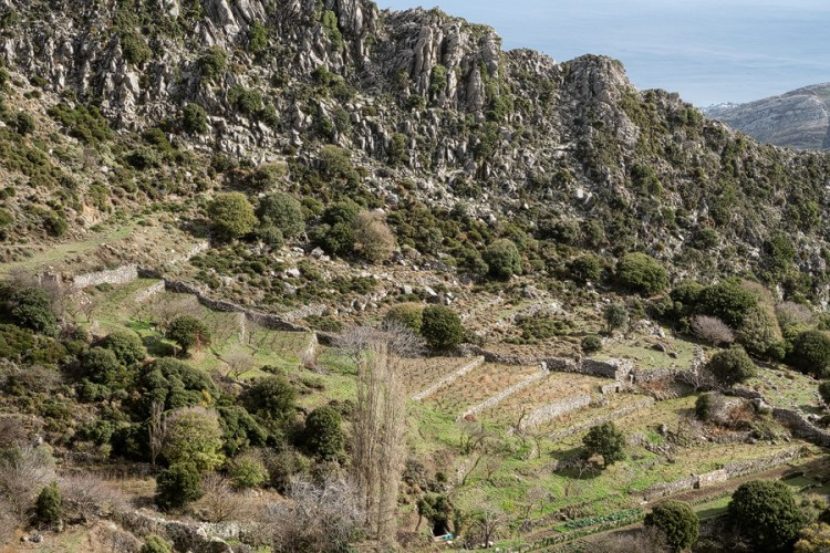 Vineyards - absent from Andros - on Naxos.