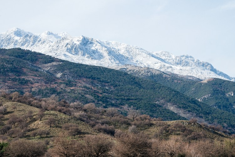Layers of vegetation at various elevations on Samothraki.