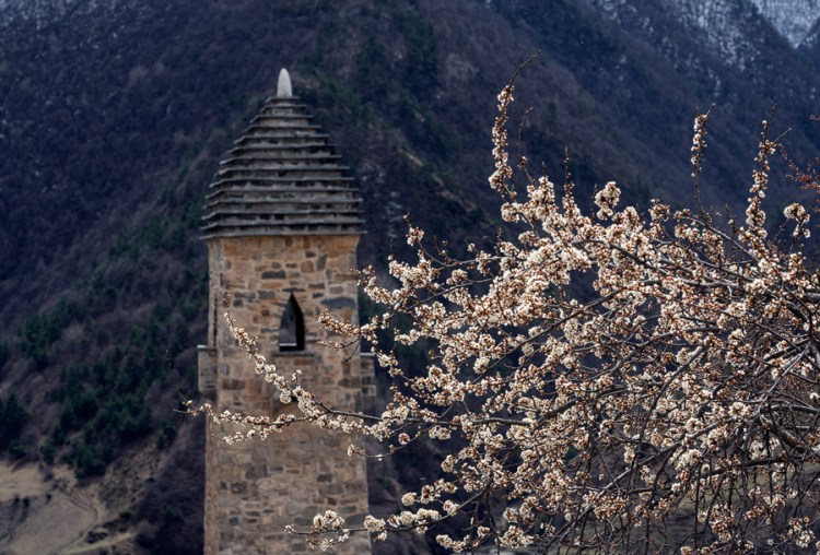 Malus sp? Ingushetia, 2/4/16, with defensive tower in the background.