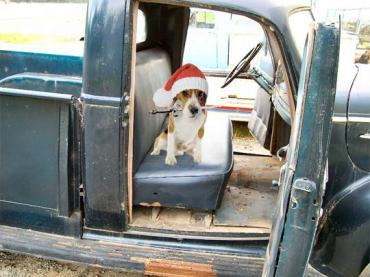 Hudson_Beagle_Christmas