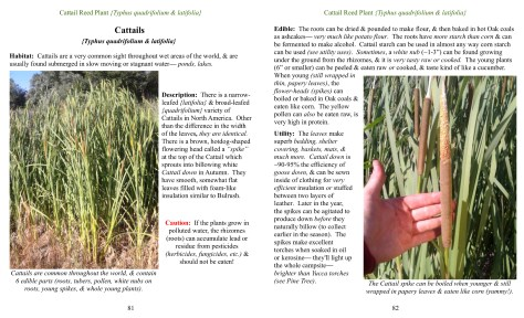 cattail pages for ad