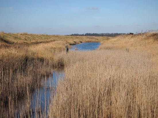 tranquil view oof the reedbeds at Trimley