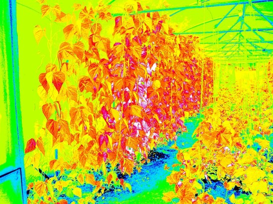 from a different angle, NDVI