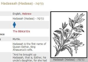 hadassah myrtle