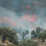 Settlers Burn Palestinian Fields: 'In Blood and Fire Shall Judea Rise'