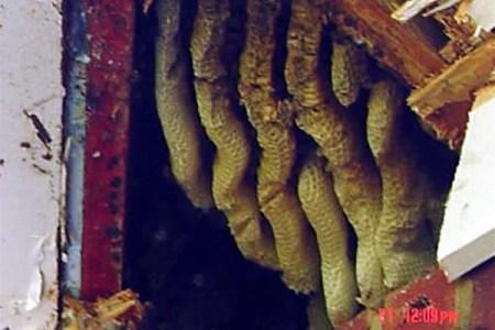 honeycomb removal marietta