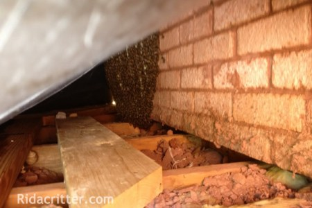 honey bee control roswell ga1