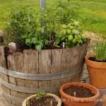 herb barrels - feature