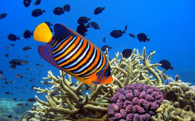 Colourful Fish   Aquarium of Canada