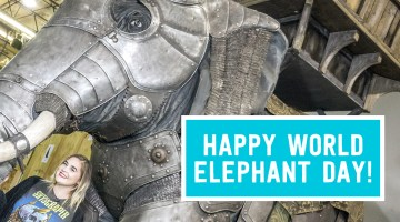 Elephant-Armor-Header1