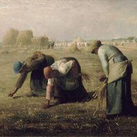 Retour et métamorphoses du droit de glanage, racine historique des Communs