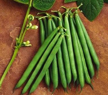 فوائد الفاصولياء الخضراء