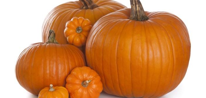Group of pumpkins isolكل ما تريد معرفته عن بذور اليقطين او القرع وفوائده
