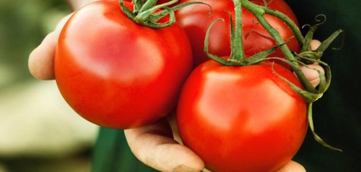 الطماطم تقلل من خطر الاصابة بسرطان البروستاتا بنسبه 20%