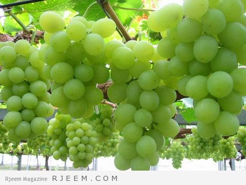 عصيرالعنب اﻻخضر للوجه