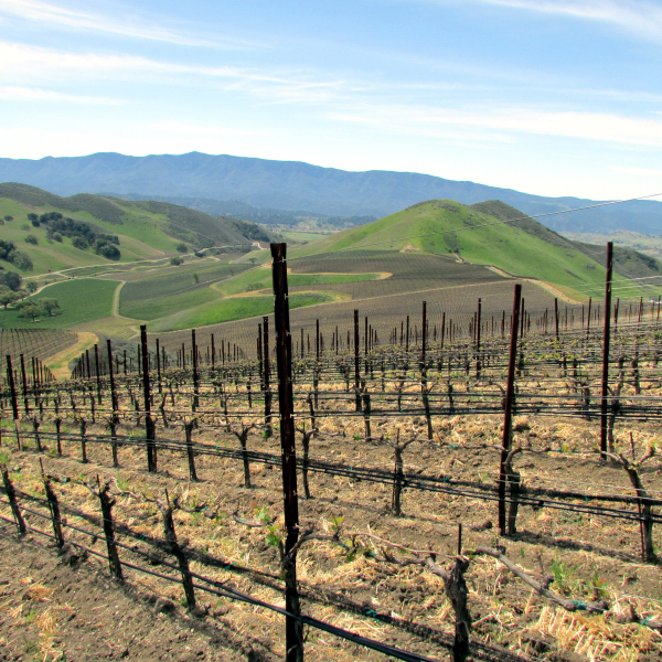 view of Happy Canyon from northernmost vineyard at Star Lane