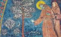 franciscus preekt tot de vogels