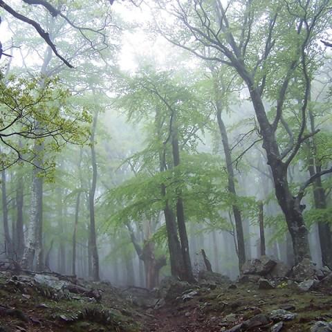 Brume sur la réserve