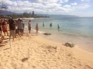 Sea Turtle Sunning on the Beach at Shark's Cove