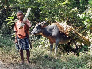 Sumbawa Besar villager, Indonesia