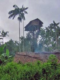 Korowai tree house, West Papua, Indonesia