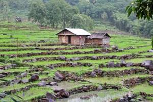 Manggarai district stone rice terraces