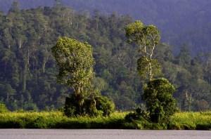 Lore Lindu mountain jungle, Central Ssulawesi