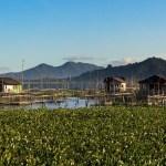 indonesia-sulawesi-lake-tondano-fish-farms