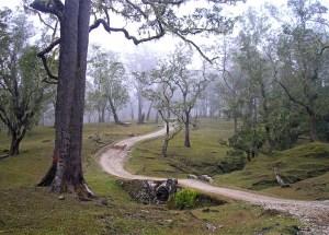 Fatumnasi highlands, West Timor, Indonesia