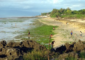 Kupang town beach at low tide